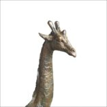 giraffe-baby-3